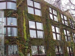 Вертикальные сады из биологического бетона